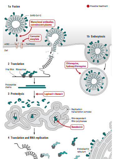 Figure 3: Schematic representation of Coronavirus replication cycle and the target site of each repurposed drug.